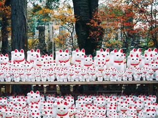 東京 招き猫 豪徳寺 紅葉の写真・画像素材[2615152]