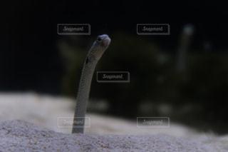 水族館の写真・画像素材[2610676]