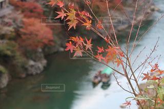 秋の写真・画像素材[2610775]