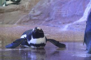 動物の写真・画像素材[2611091]
