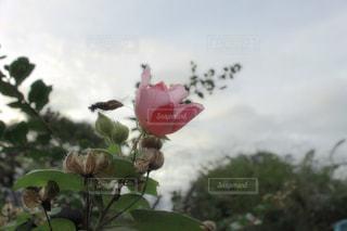 自然の写真・画像素材[268255]