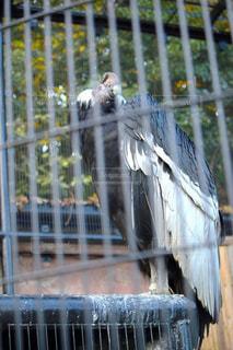 鳥 - No.290147
