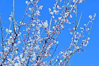 花の写真・画像素材[334575]