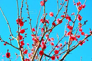 花の写真・画像素材[334577]