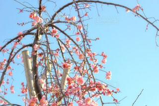 花の写真・画像素材[334591]