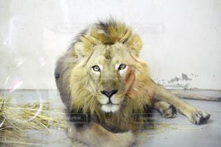 動物の写真・画像素材[353890]