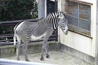 動物 - No.357553