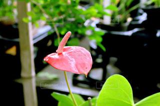 花の写真・画像素材[379503]