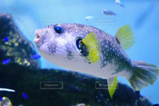 No.379547 魚