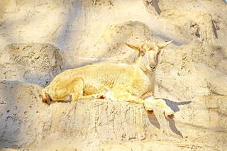 動物の写真・画像素材[386797]