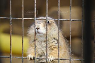 動物の写真・画像素材[387009]