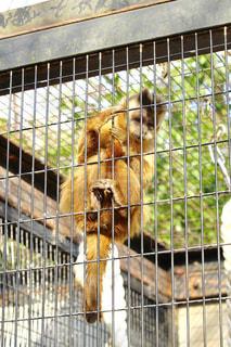 No.387116 猿