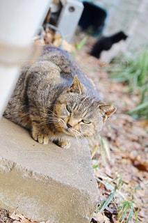 猫の写真・画像素材[387967]