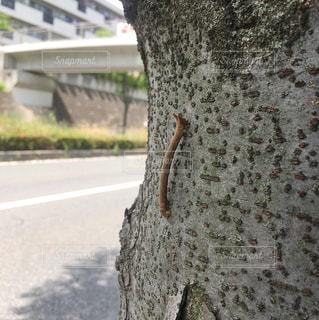 枝の写真・画像素材[509474]
