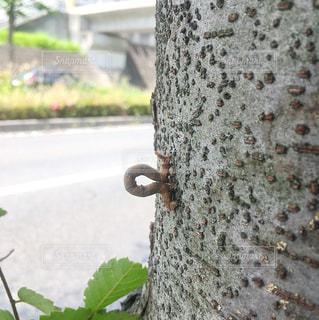 枝の写真・画像素材[509477]