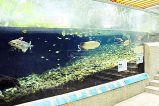 魚の写真・画像素材[559133]