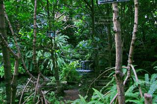 森林の写真・画像素材[568101]