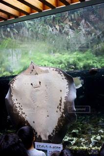 水族館の写真・画像素材[571182]