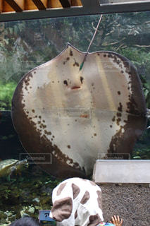 水族館の写真・画像素材[576580]