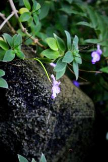 花の写真・画像素材[662163]