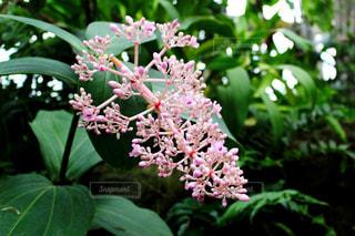 花の写真・画像素材[663000]