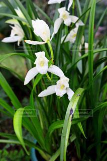 花の写真・画像素材[663001]