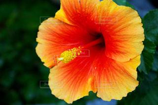 花の写真・画像素材[663020]