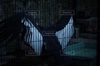 ケージの上に座っている鳥 - No.936978