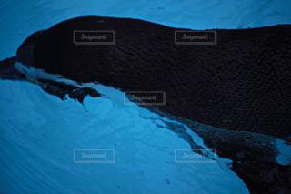 プールで泳ぐペンギン - No.939567