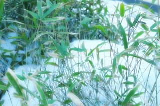 緑の植物の写真・画像素材[958846]