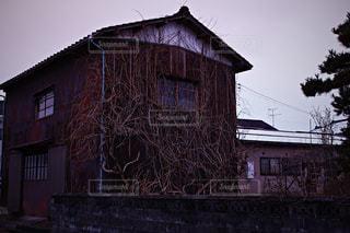 木に侵食される家の写真・画像素材[968807]