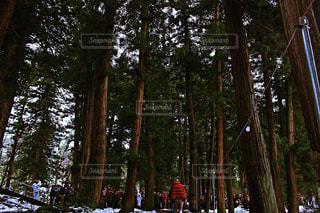 初詣の行列 - No.977607