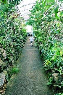 植物園を走る子 - No.984448