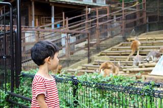 動物園おでかけの写真・画像素材[985988]