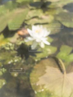 近くの花のアップ - No.1243132