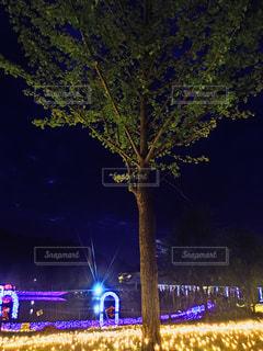 夜のライトアップされた木の写真・画像素材[1397755]