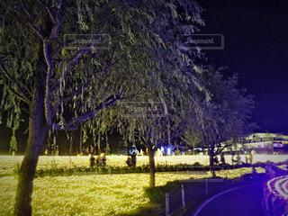 木の写真・画像素材[1409147]