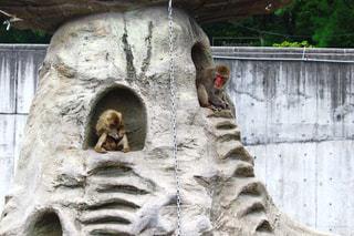 猿山の写真・画像素材[1427404]