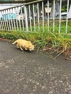 警戒心丸出しの猫の写真・画像素材[4528175]