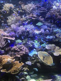 水族館の写真・画像素材[2616547]