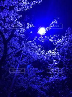 花の写真・画像素材[2754364]