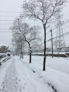 冬の写真・画像素材[107137]
