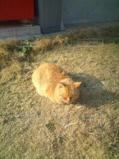 猫の写真・画像素材[112772]