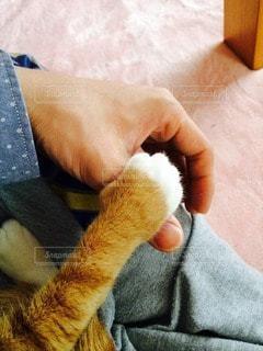 猫の写真・画像素材[115356]