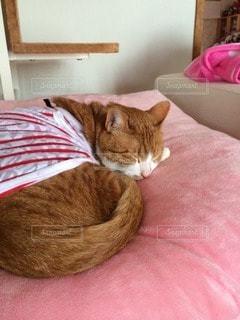 猫の写真・画像素材[115358]