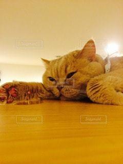 猫の写真・画像素材[115360]