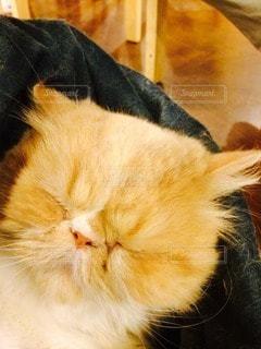 猫の写真・画像素材[115361]