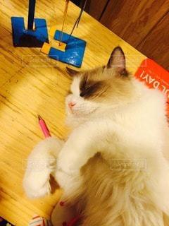 猫の写真・画像素材[115362]