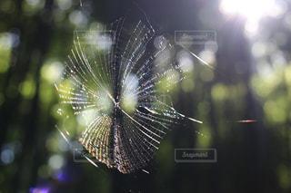 蜘蛛の巣の写真・画像素材[2719112]