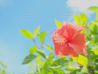 花の写真・画像素材[2614094]